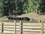 Three large outdoor feeders are used to hold hay while the balck angus herd eat.