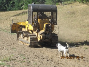 A black and white dog follows the bulldozer as it heads up the logging road.