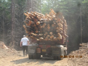 A loaded log truck destined for the pulp mill.