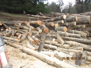16 inch pieces of firewood cut from log deck.
